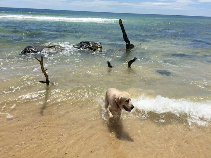 MACKS swimming at our First Destination on our Road Trip Adventure - Rainbow Beach