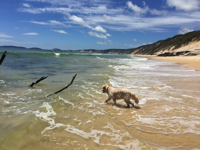 Rainbow Beach - MACKS wanting to chase these sticks