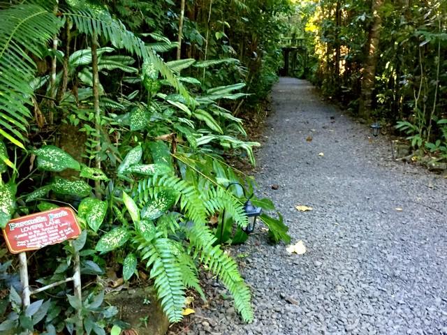 Paronella Park Lover's Lane