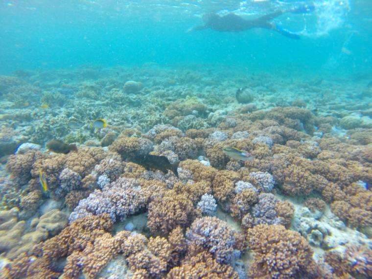 Hardy Reef Underwater experience