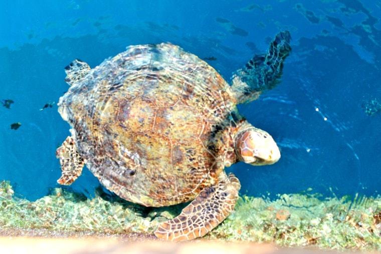 giant turtle reefsleep experience
