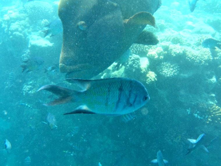 last minute snorkeling