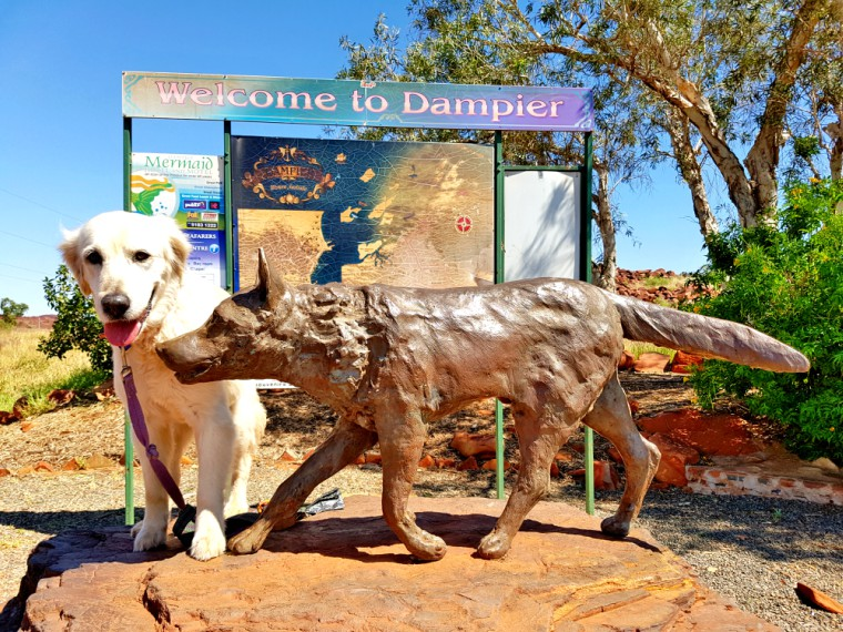 Meeting Red Dog in Dampier