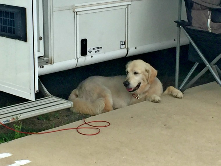 Somehow she often wedged herself under the motorhome