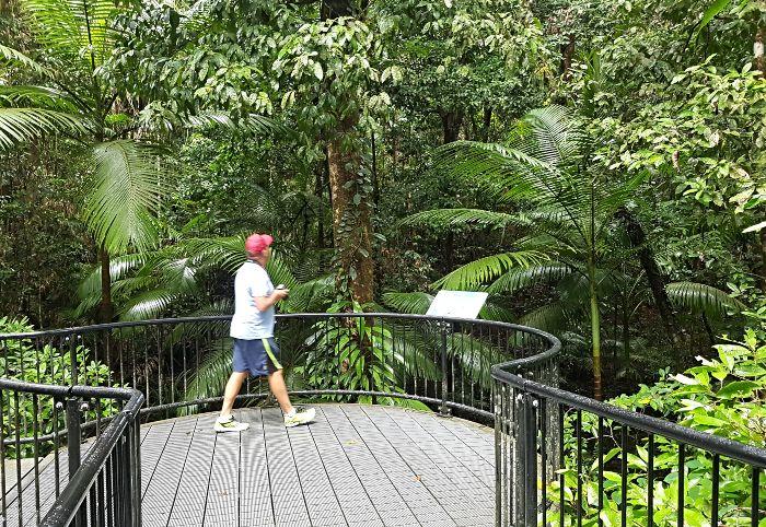 Stunning rainforest at Mossman Gorge