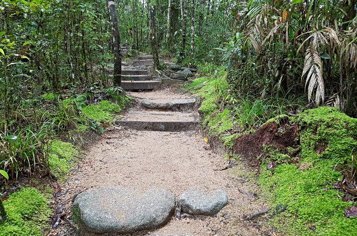 Mossman Gorge bush track