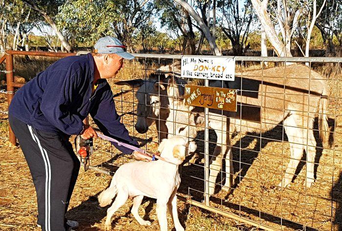 Our dog MACKS meeting the Banka Banks Station Animals