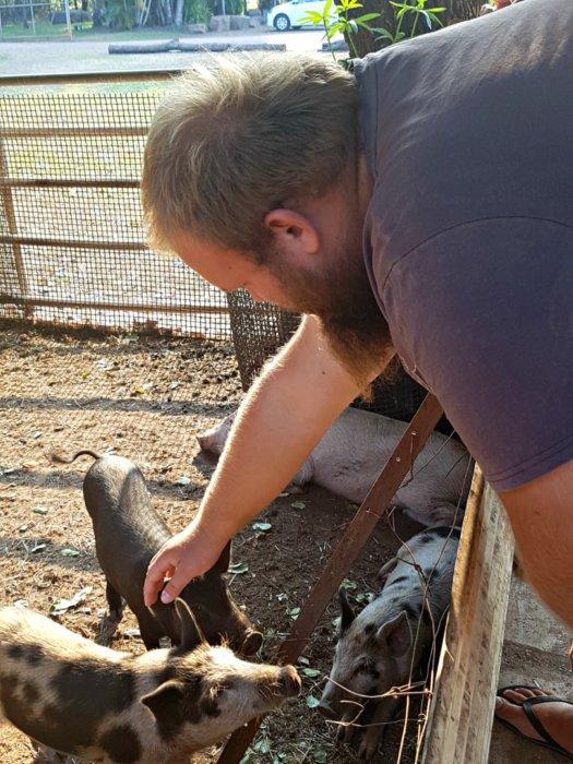 Matt patting the pigs