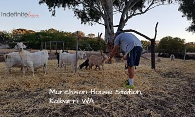 Murchison House Station