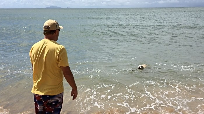 MACKS swimming out the front of our favourite Mackay Caravan Park Bucascia Beach