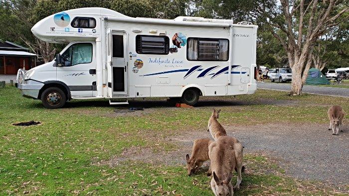 Kangaroos around our campsite