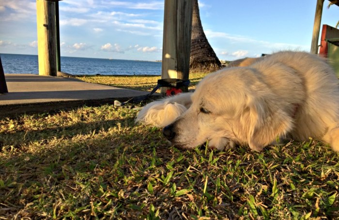 Vet & Dog Sitting costs are one of the costs to travel Australia with a pet