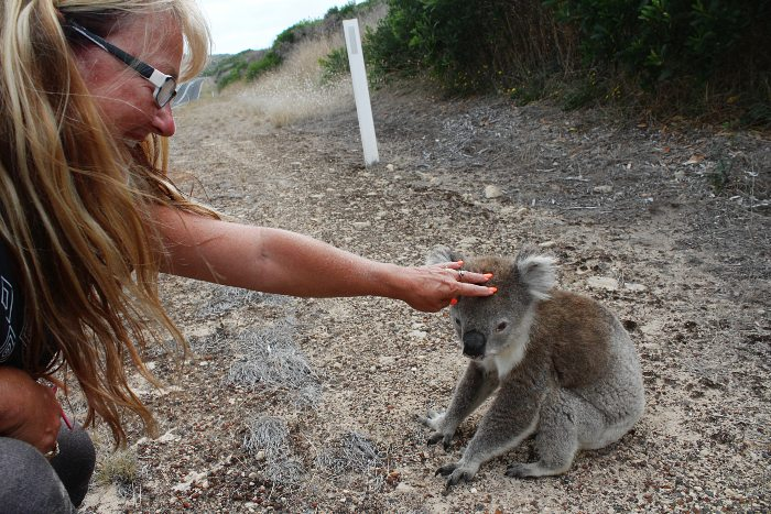 Adele patting a koala in the wild for the first time