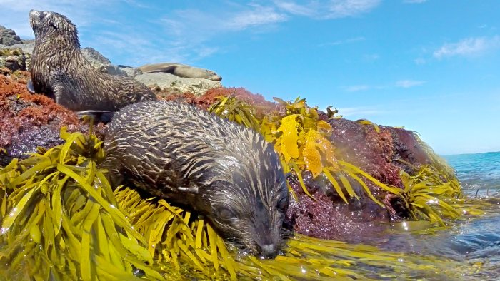 Seals at Montague Island is one of the other more popular attractions close to Dalmeny Campground