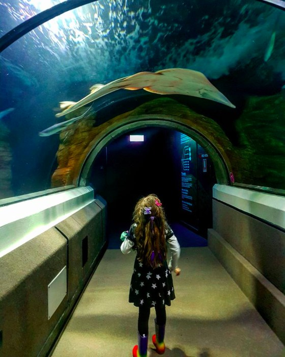 Sea Life Aquarium - another thing you must do on the Sunshine Coast