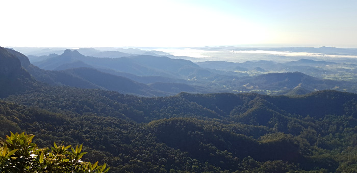Springbrook National Park Top 5 Attractions - The Best of All Lookout