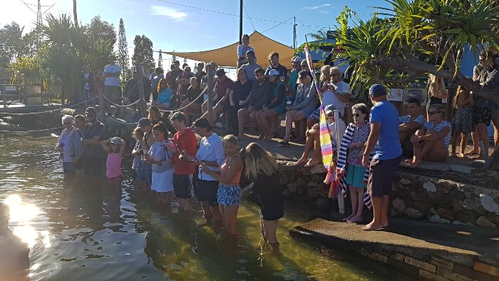 Crowds gathering for the dolphin feeding