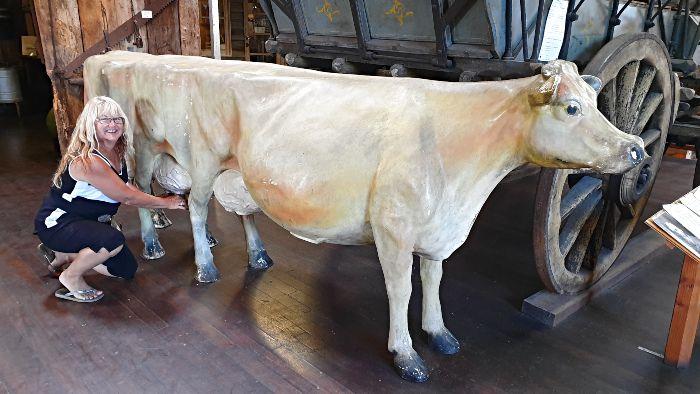 Milking an 8 legged cow lol