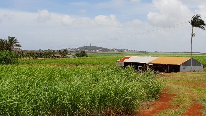 View of the Hummock from the cane fields
