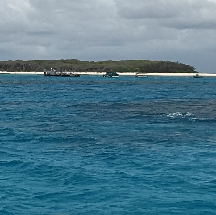 Lady Musgrave Island Tour
