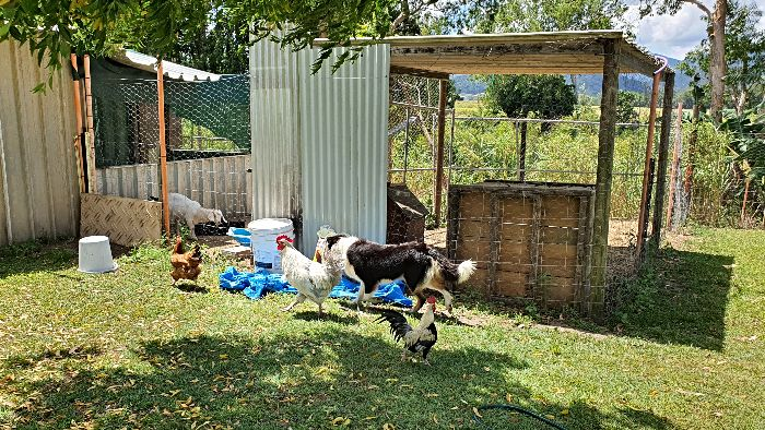 Neem Hall Finch Hatton Animal Farm