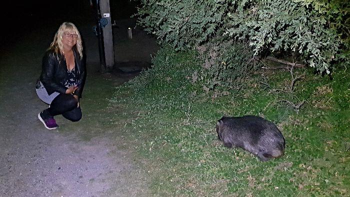 Wilsons Promontory Camping Wombat Watch