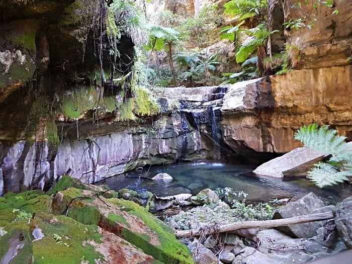 Moss Garden Carnarvon Gorge