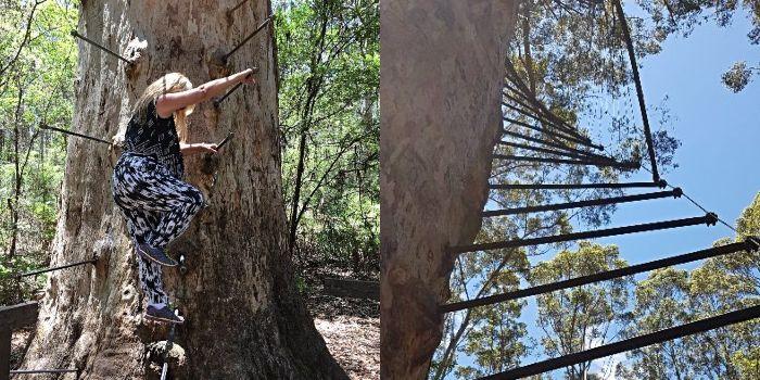 Pemberton Tree Climb