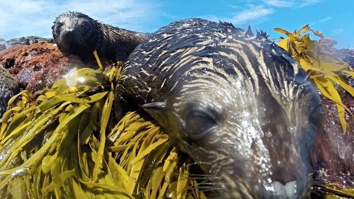 Seals on Montague Island